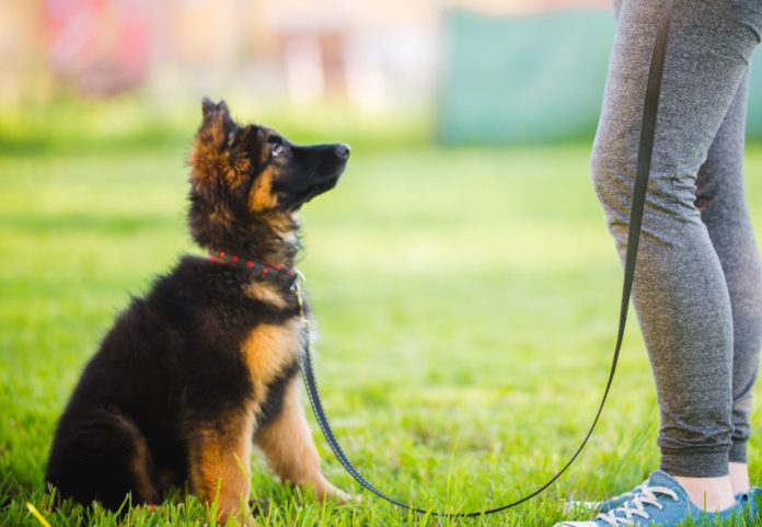 When to start training your puppy.