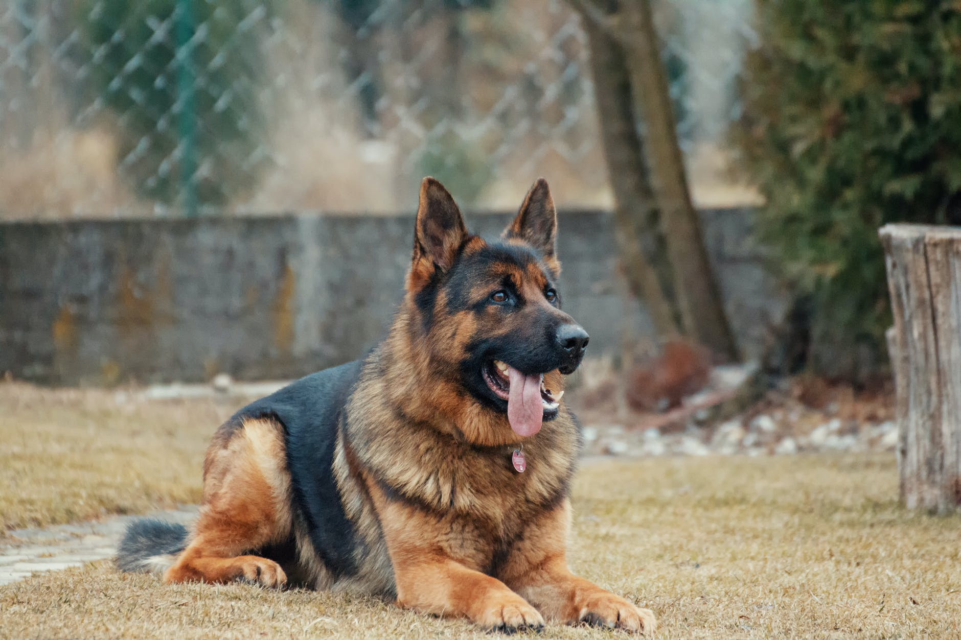 animal animal photography blur breed